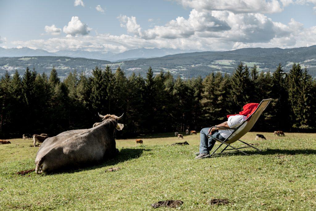 Mucche Viola Patricia